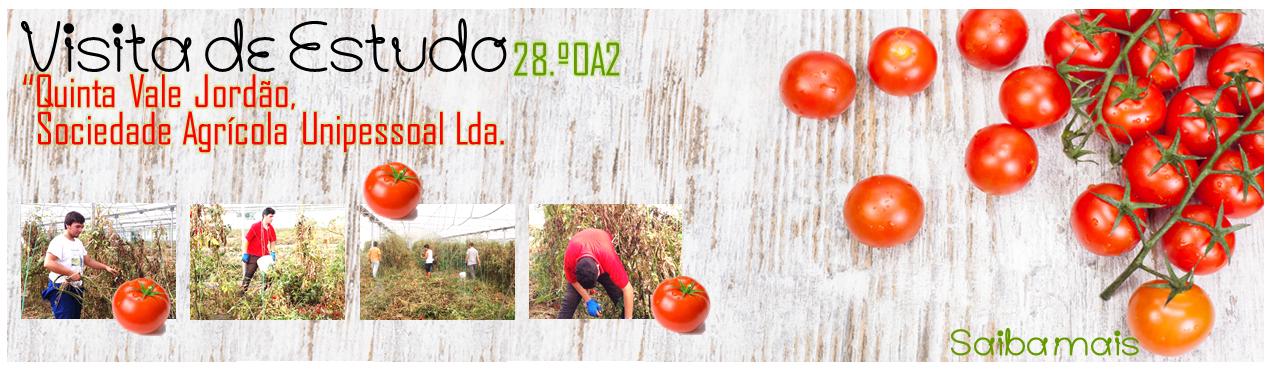 Visita estudo apanha tomates