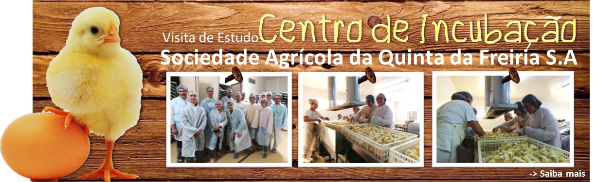 Visita de estudo ao Centro de Incubação da Sociedade Agrícola da Quinta da Freiria S.A ( Roliça - Bombarral) - Grupo Valouro