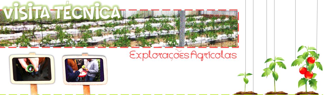 Visita técnica a Exploração Agrícola