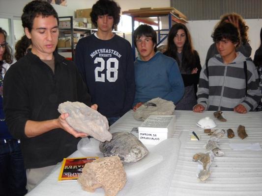 Fossil Vertebral
